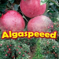 ALGASPEED