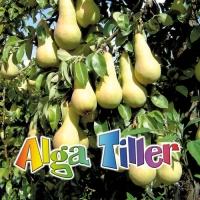 ALGA TILLER