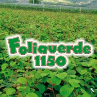 FOLIAVERDE 1150