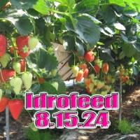 IDROFEED 8-15-24