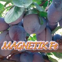 MAGNETIK Fe