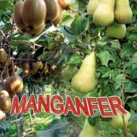 MANGANFER