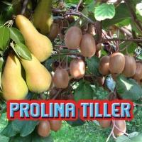 PROLINA TILLER