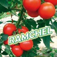 RAMCHEL