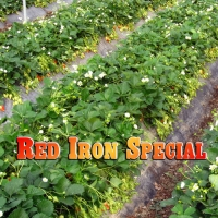 RED IRON SPECIAL