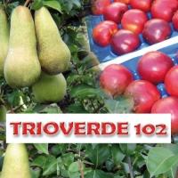 TRIOVERDE 102
